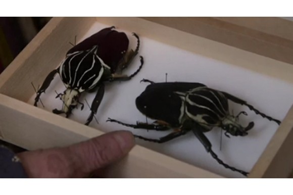 Insects by Jan Svankmajer, still: www.indiegogo.com
